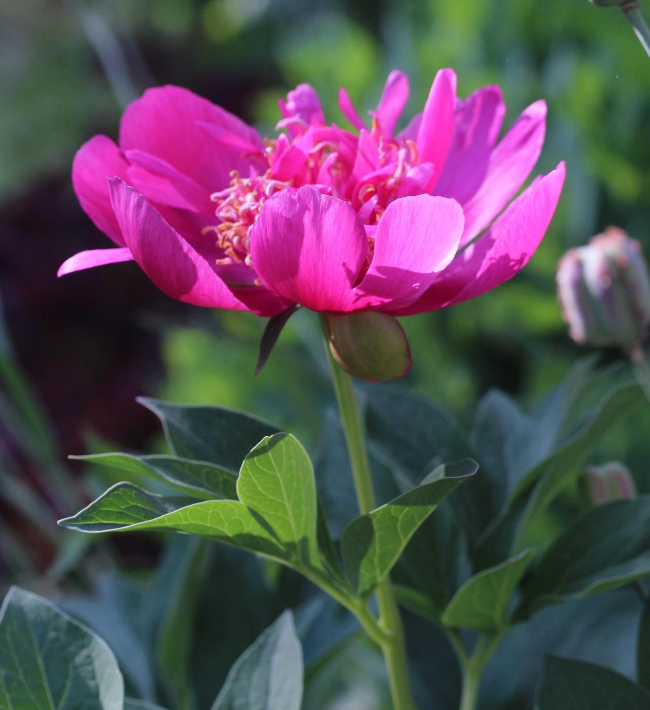 Nupusta kukkaan