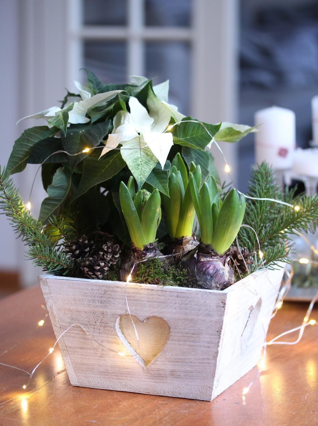Koti jouluasuun