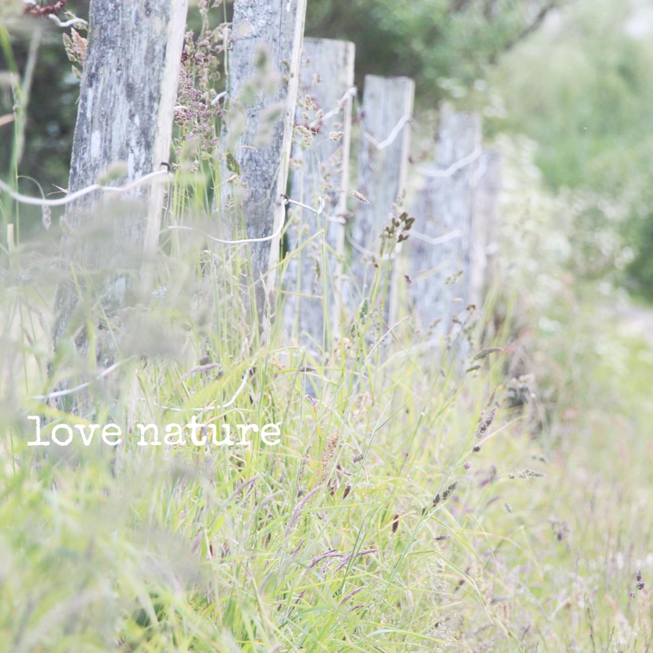 nature_0.jpeg