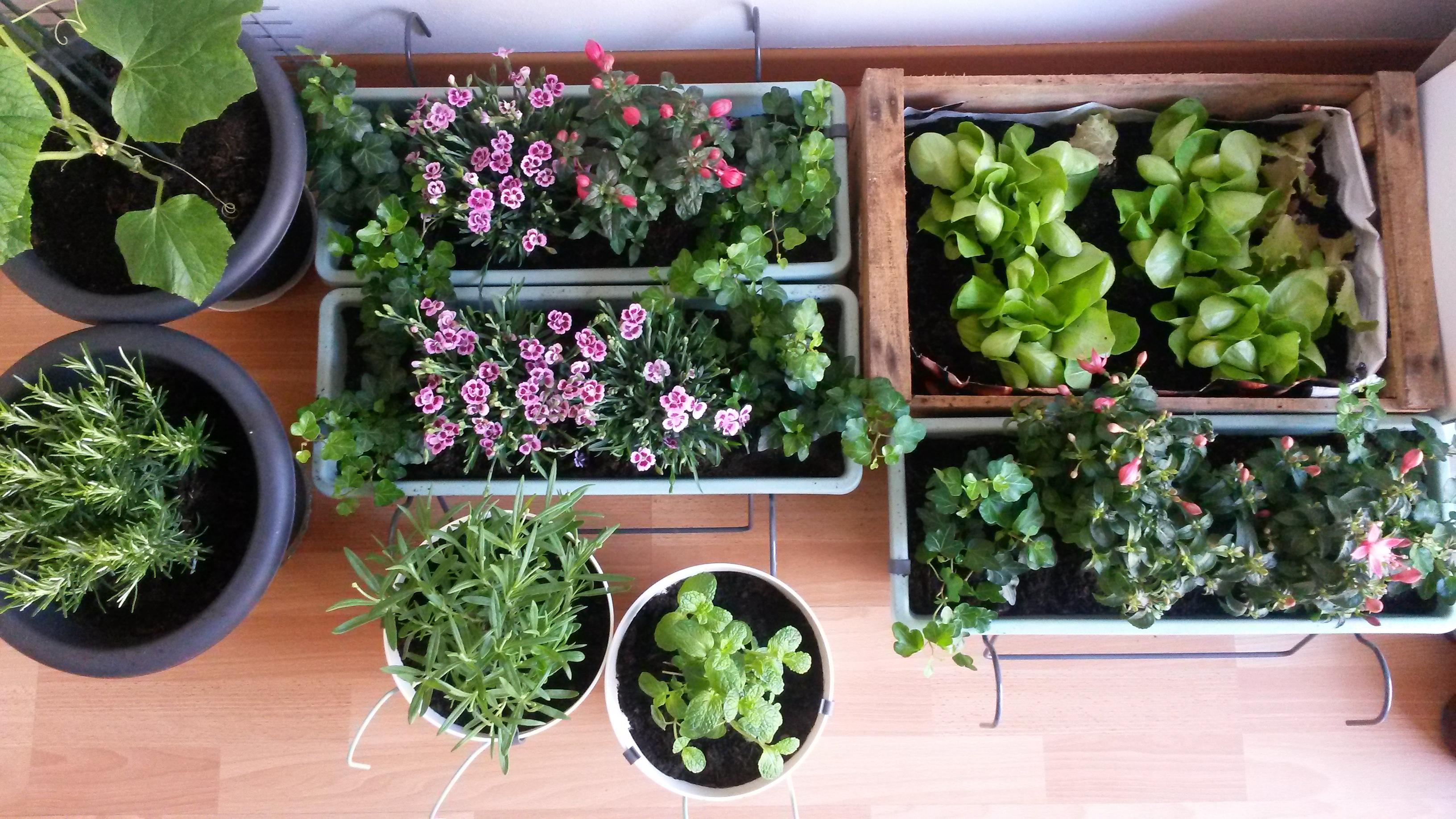 Salaatti, ahkeraliisa, neilikka, minikurkku, rosmariini