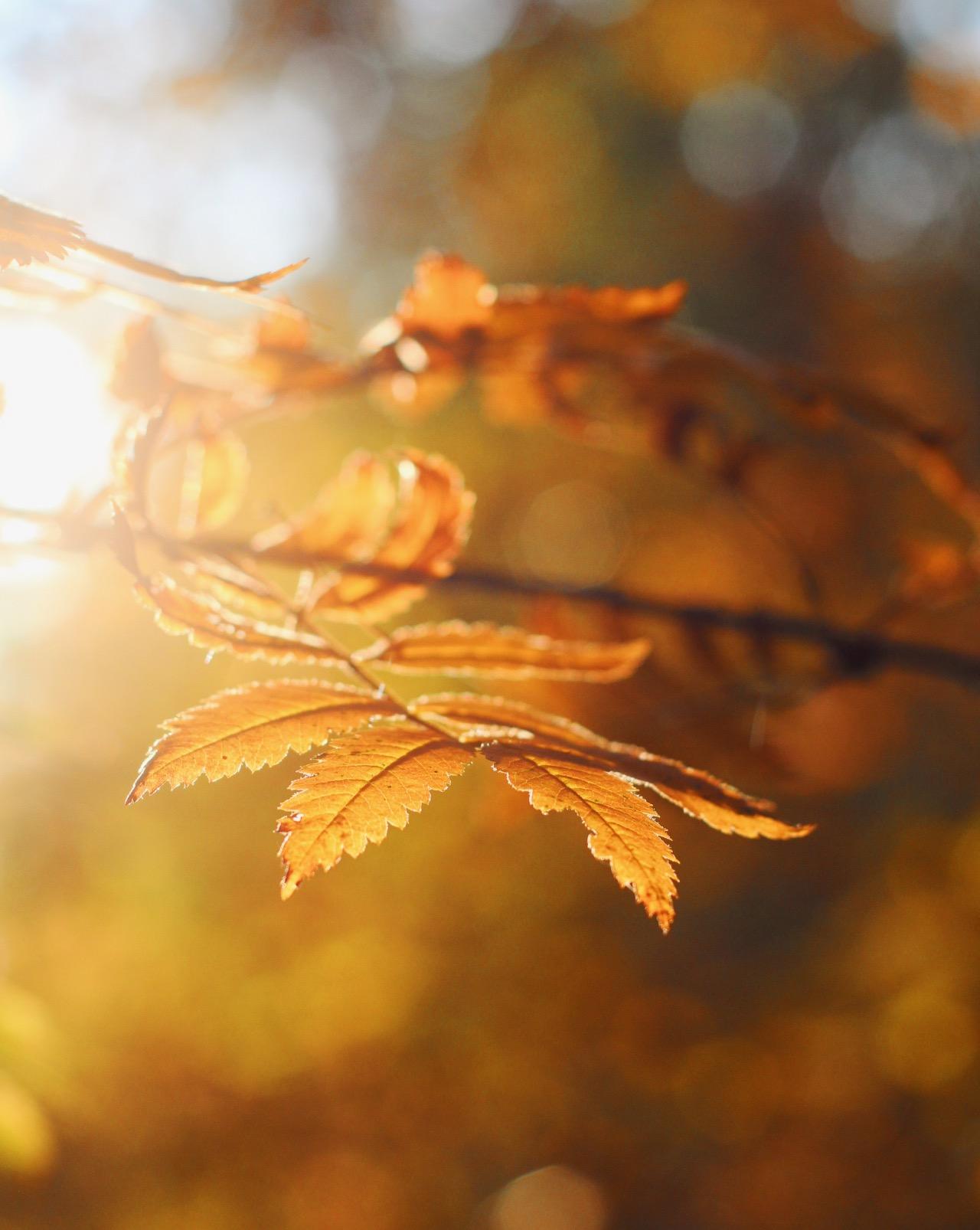 Miksi luonto tekee niin hyvää? 14 syytä lähteä luontoretkelle