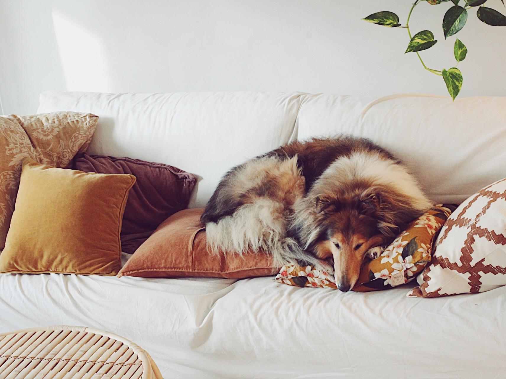 Viikon parhaat: valkoinen sohva, noitapiiri, vegaanista kosmetiikkaa ja kymmenvuotias