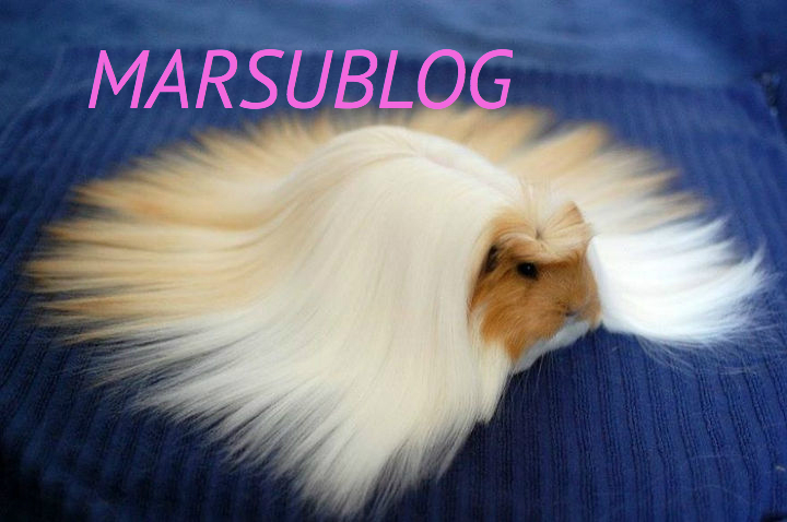 Marsublog