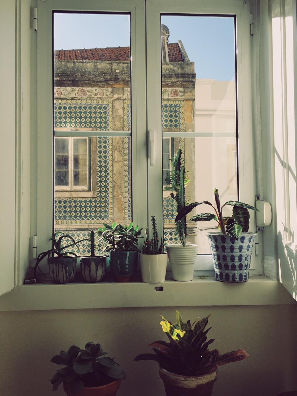 Plantfluencer