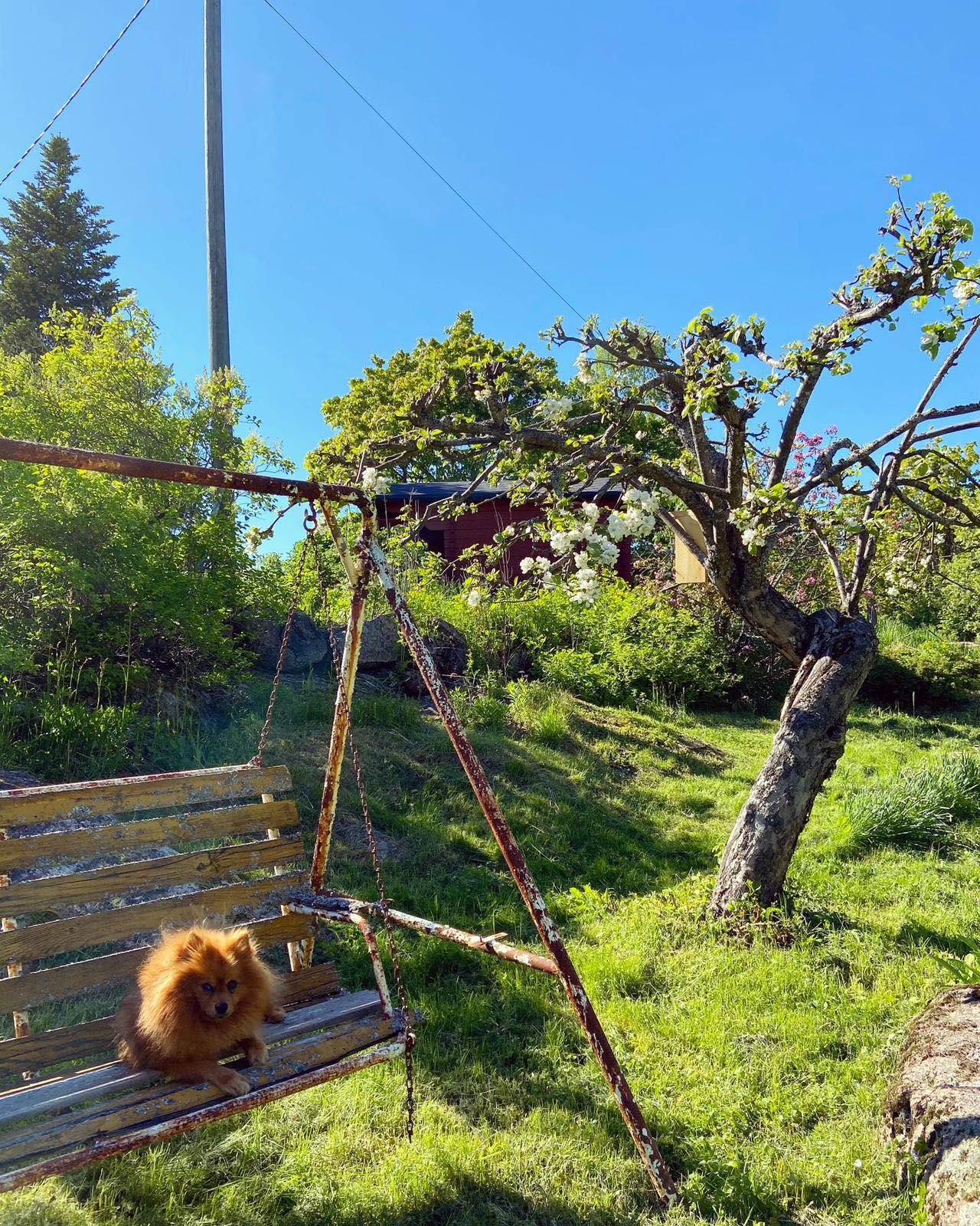 Terveisiä mökkipuutarhasta!