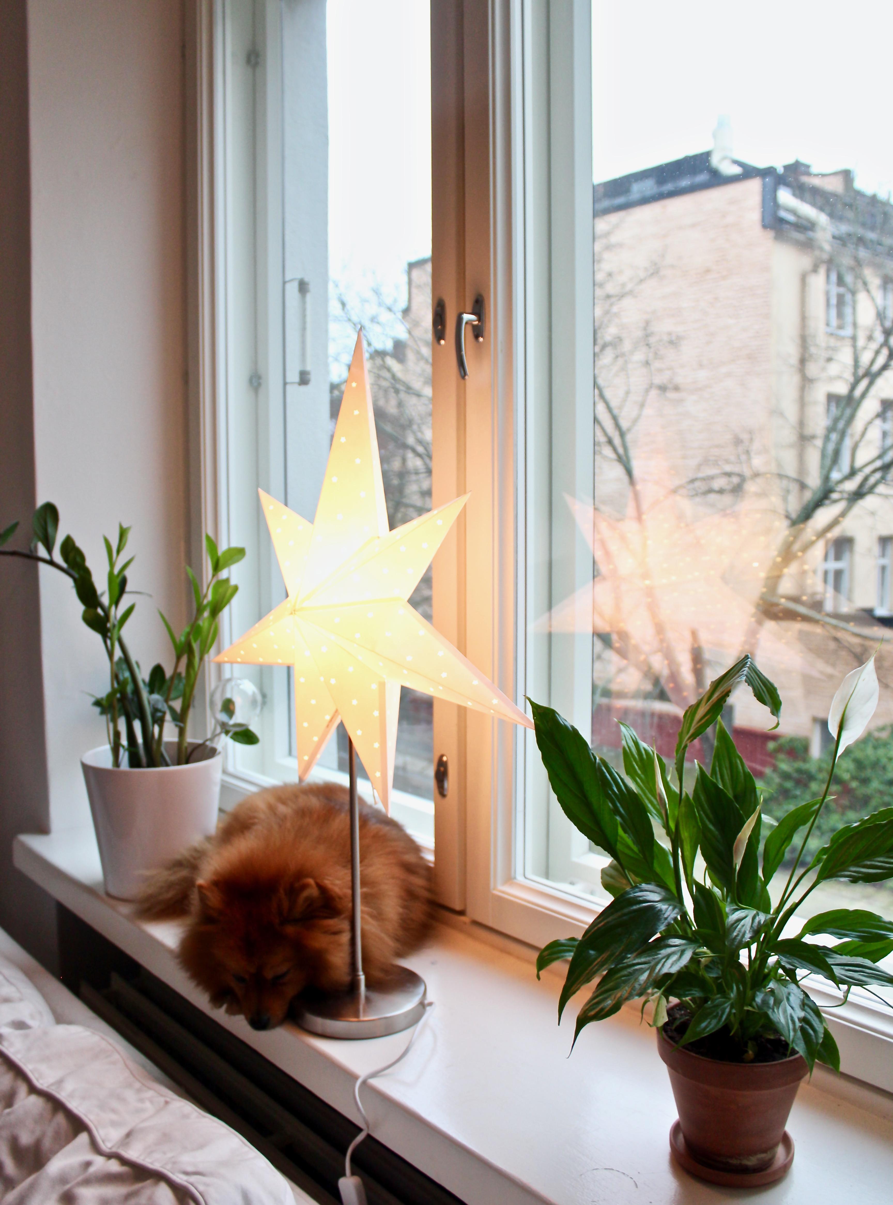 Koti jouluasussaan