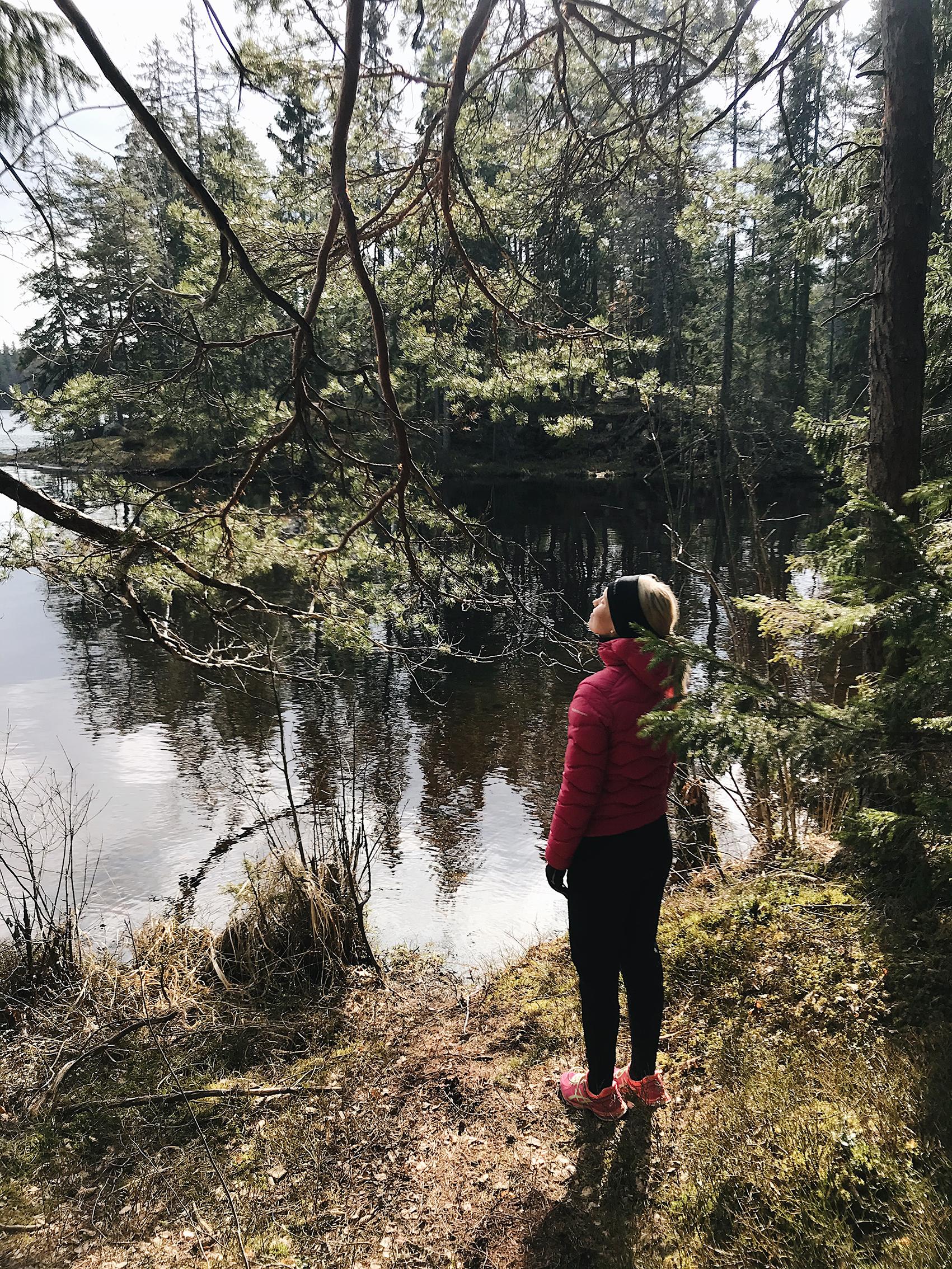 rakkaudesta metsään