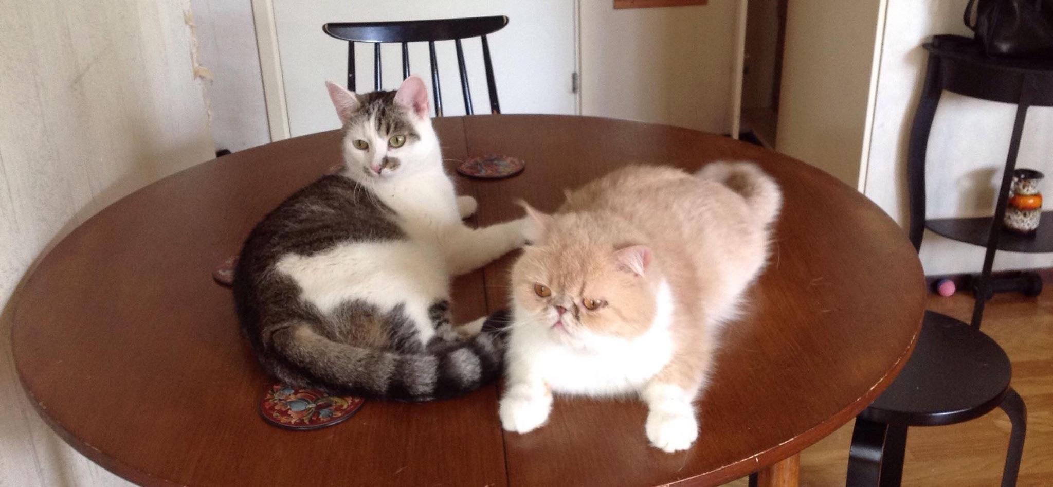 Solaria ja kissat