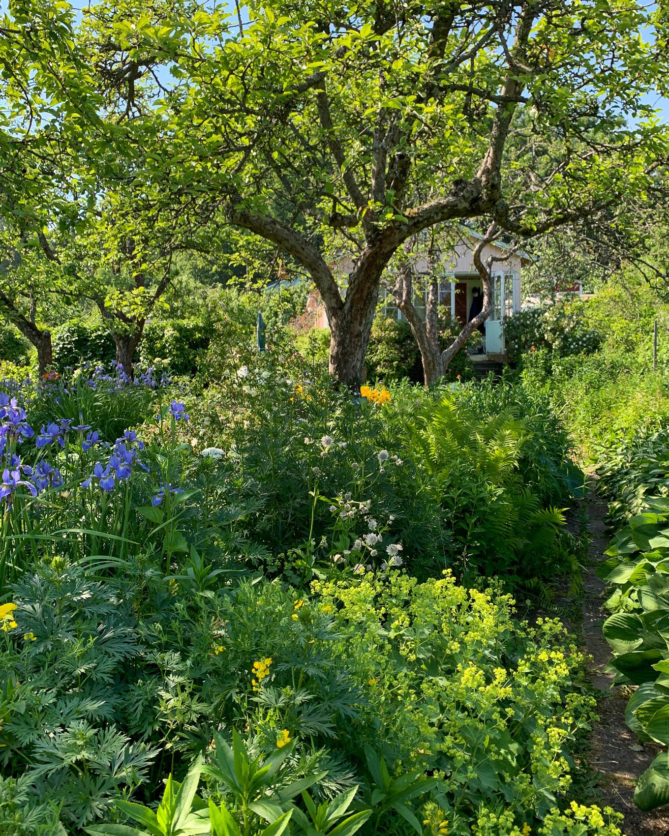 Maalla kaupungissa: juhannus puutarhamökillä