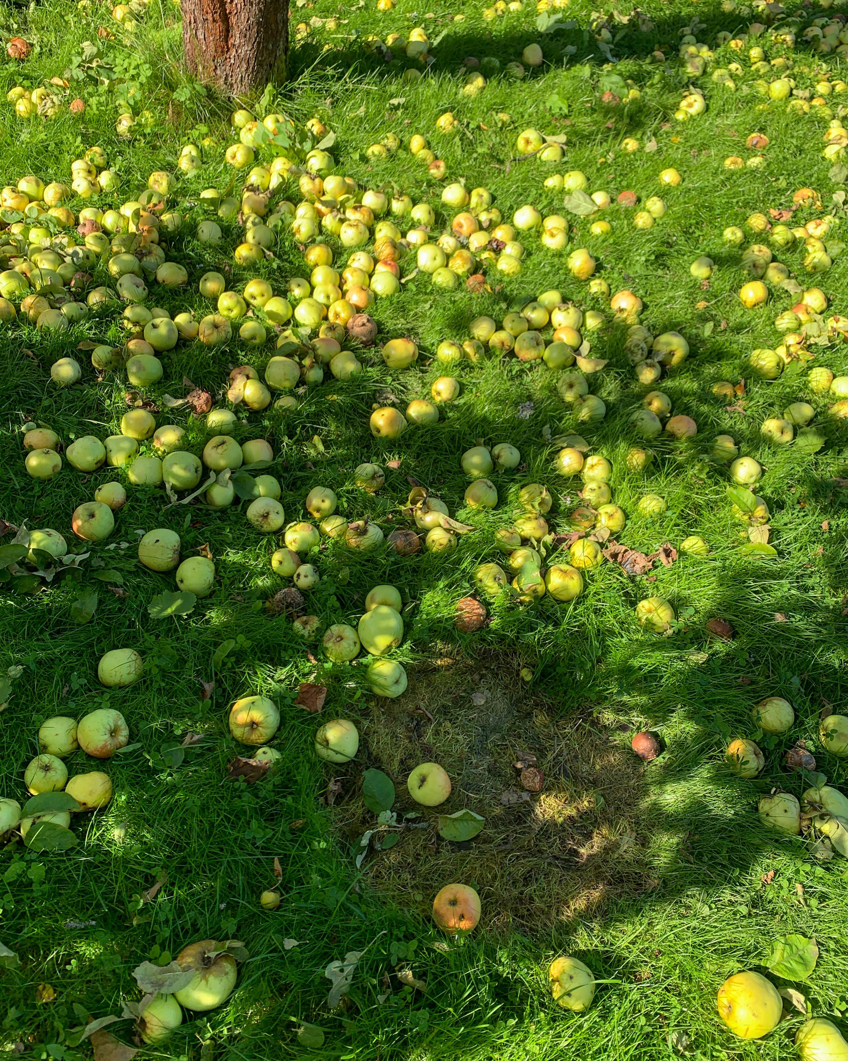 Omenamehun Puristaminen