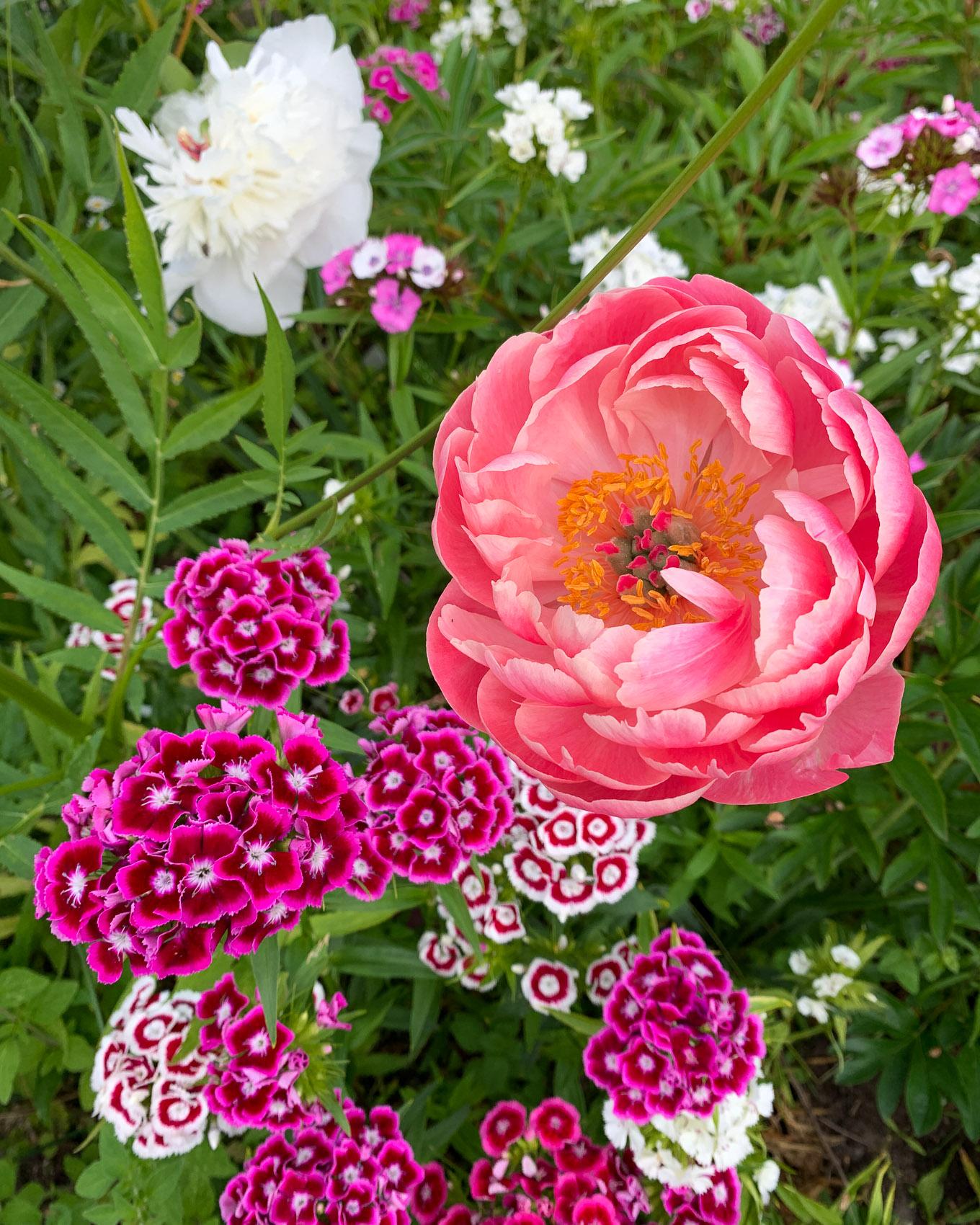 Kuulumisia puutarhasta, kasvihuoneesta ja kasvatuslaatikoista