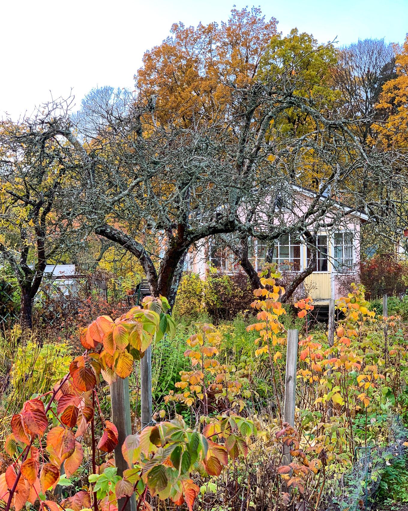Puutarha hiljentyy talven viettoon