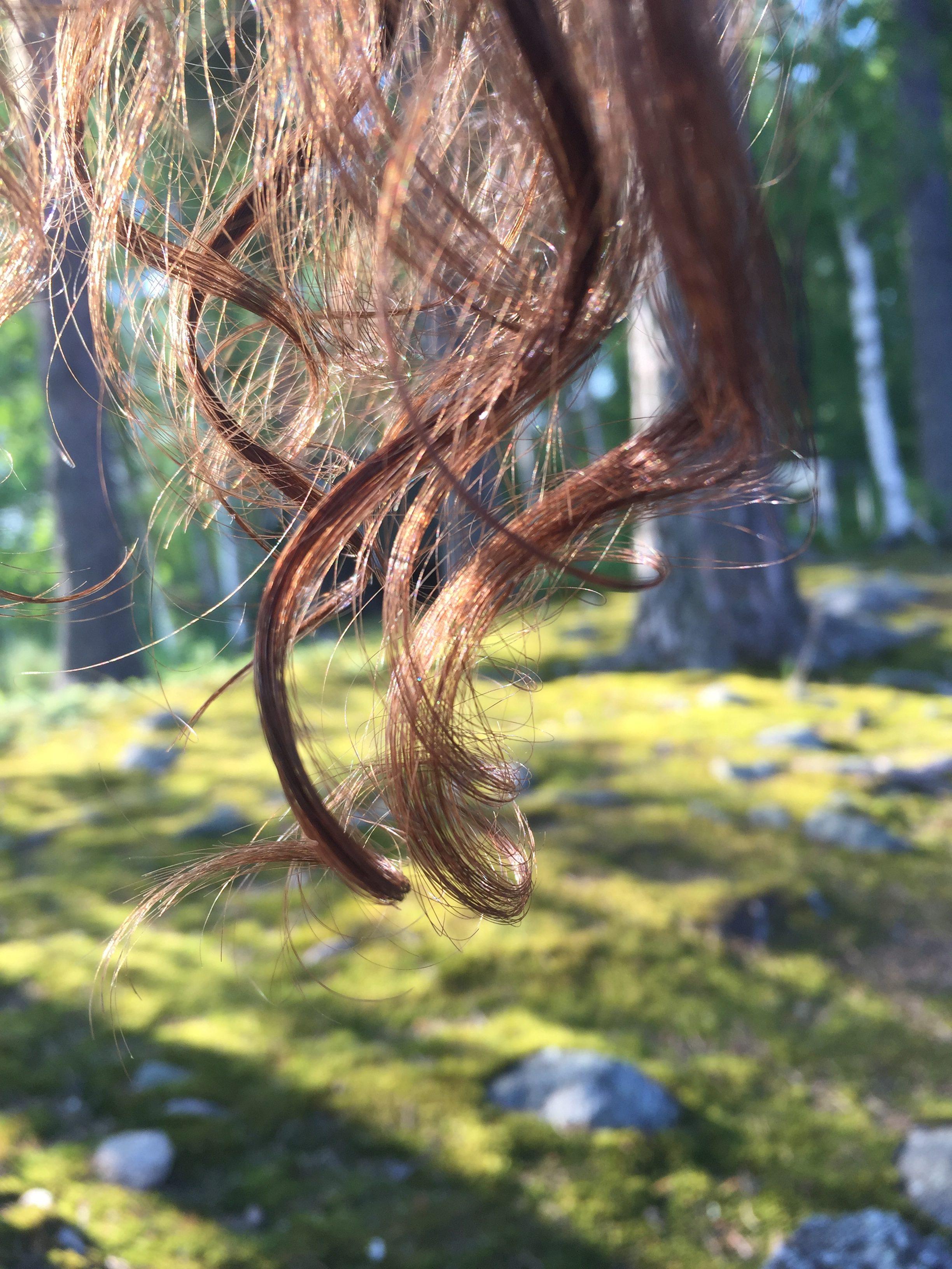 forrest, hair, sunset