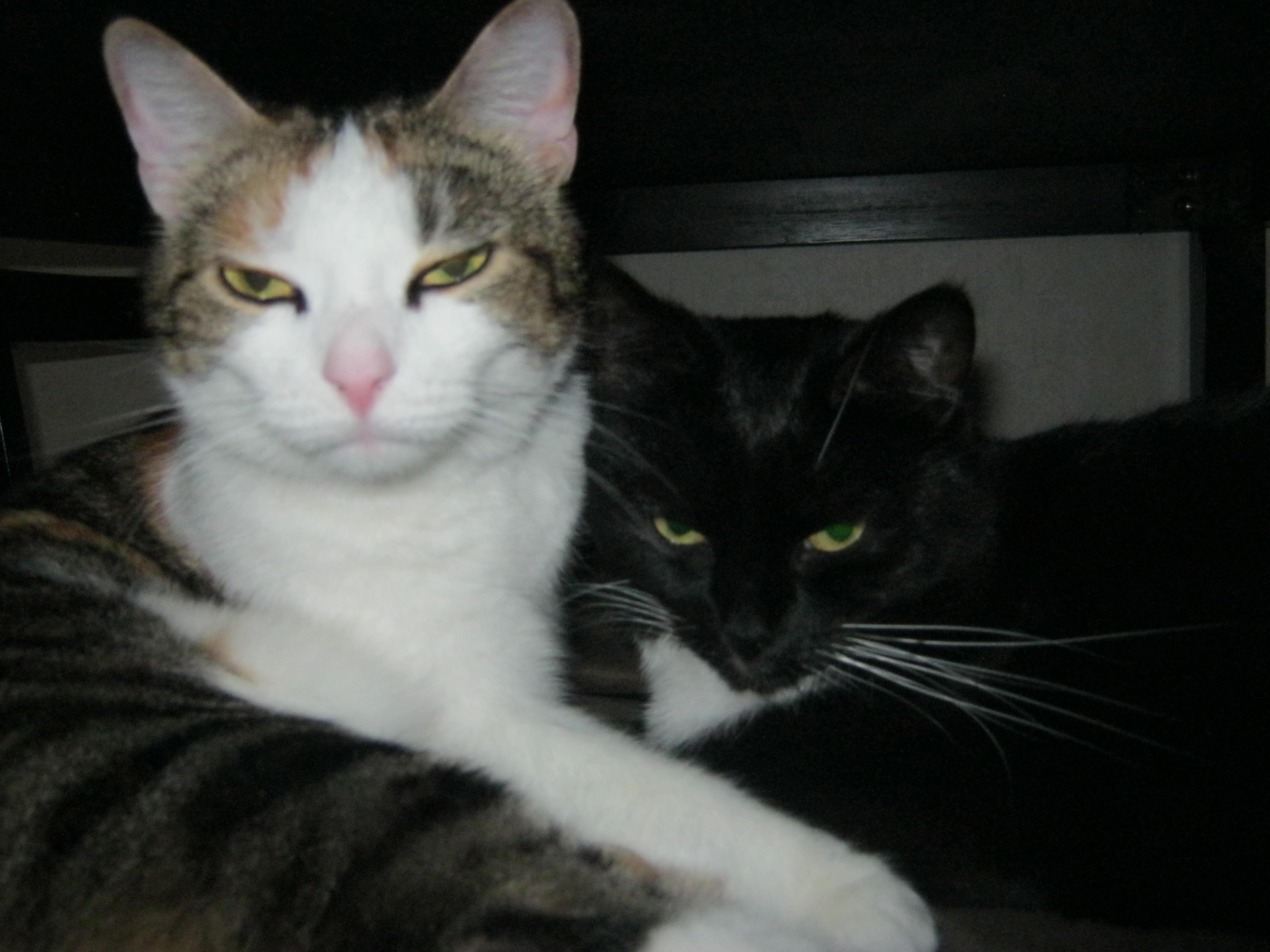 PEVS ja Minä