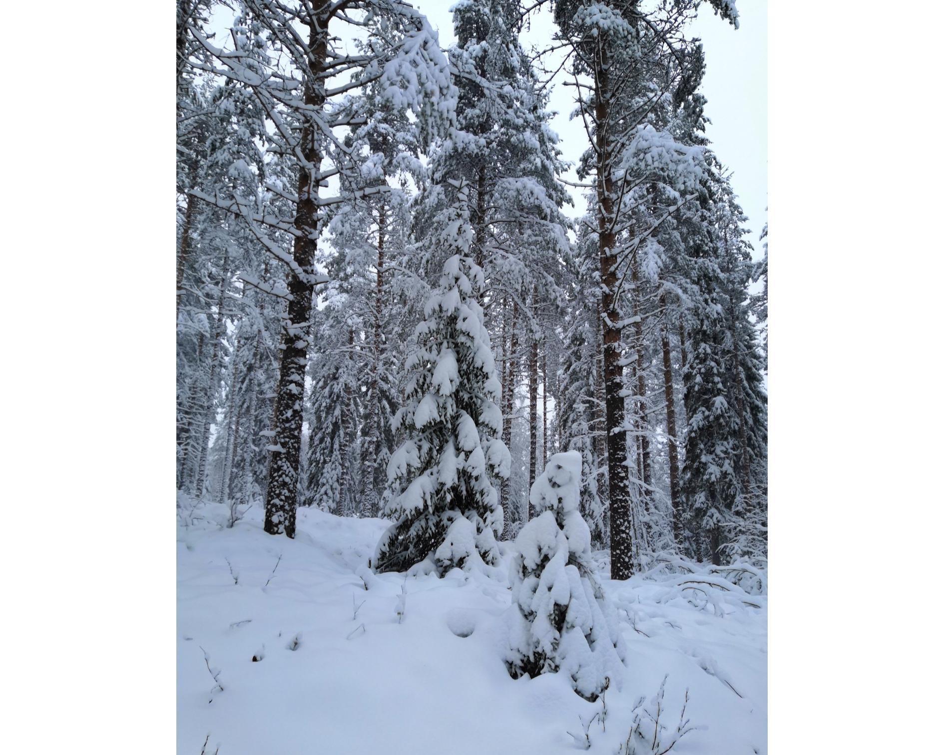 Talvista tarpomista viikolla 45