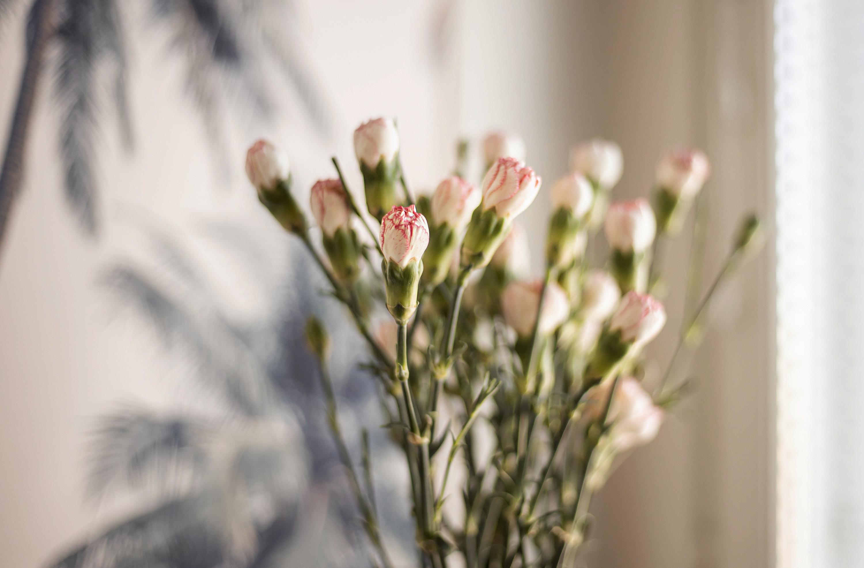 lilies blogi