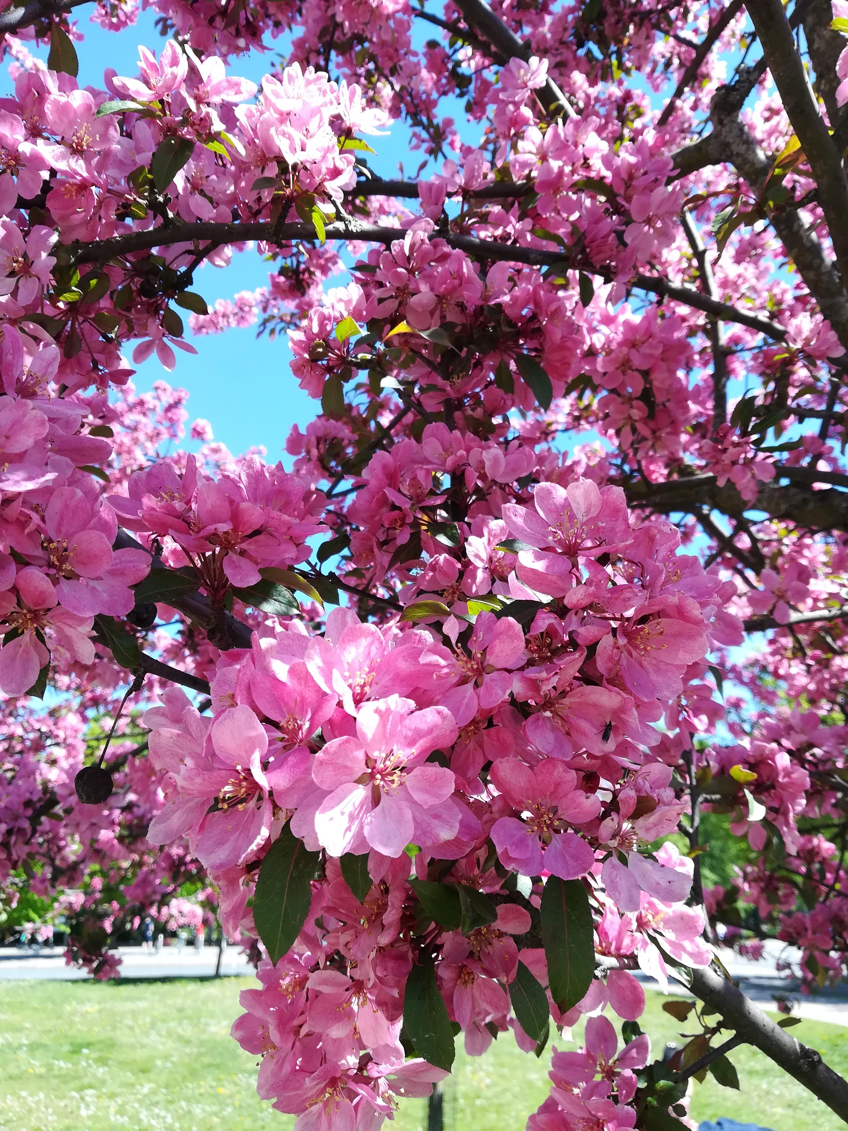 Uuden kutsumuksen löytämisestä, voimalauseista ja kuluneesta keväästä