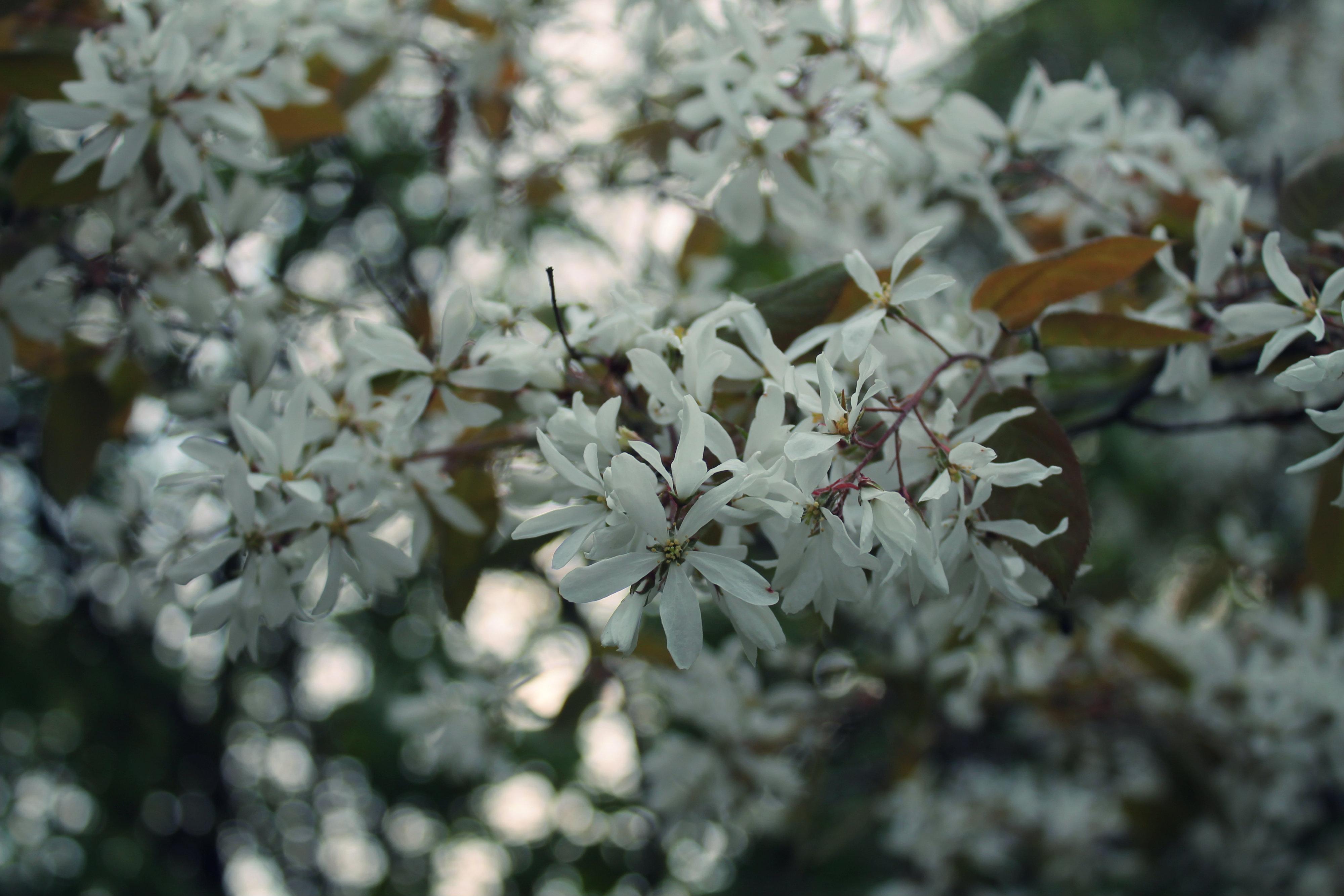 Miksi sinunkin kannattaa osallistua Mindfulness-kurssille + kevään kukkaloistoa