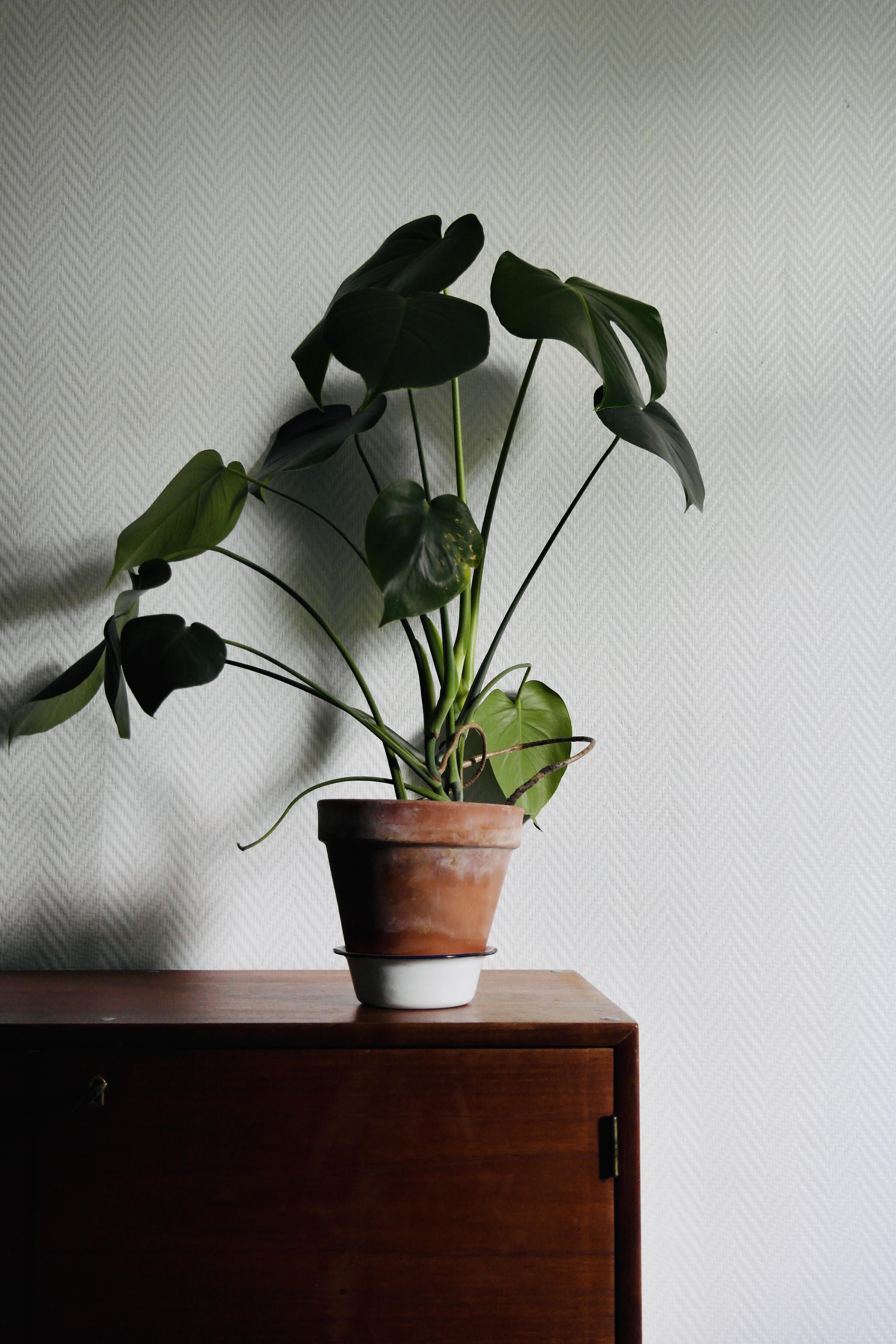 vintagesisustus ja viherkasvit