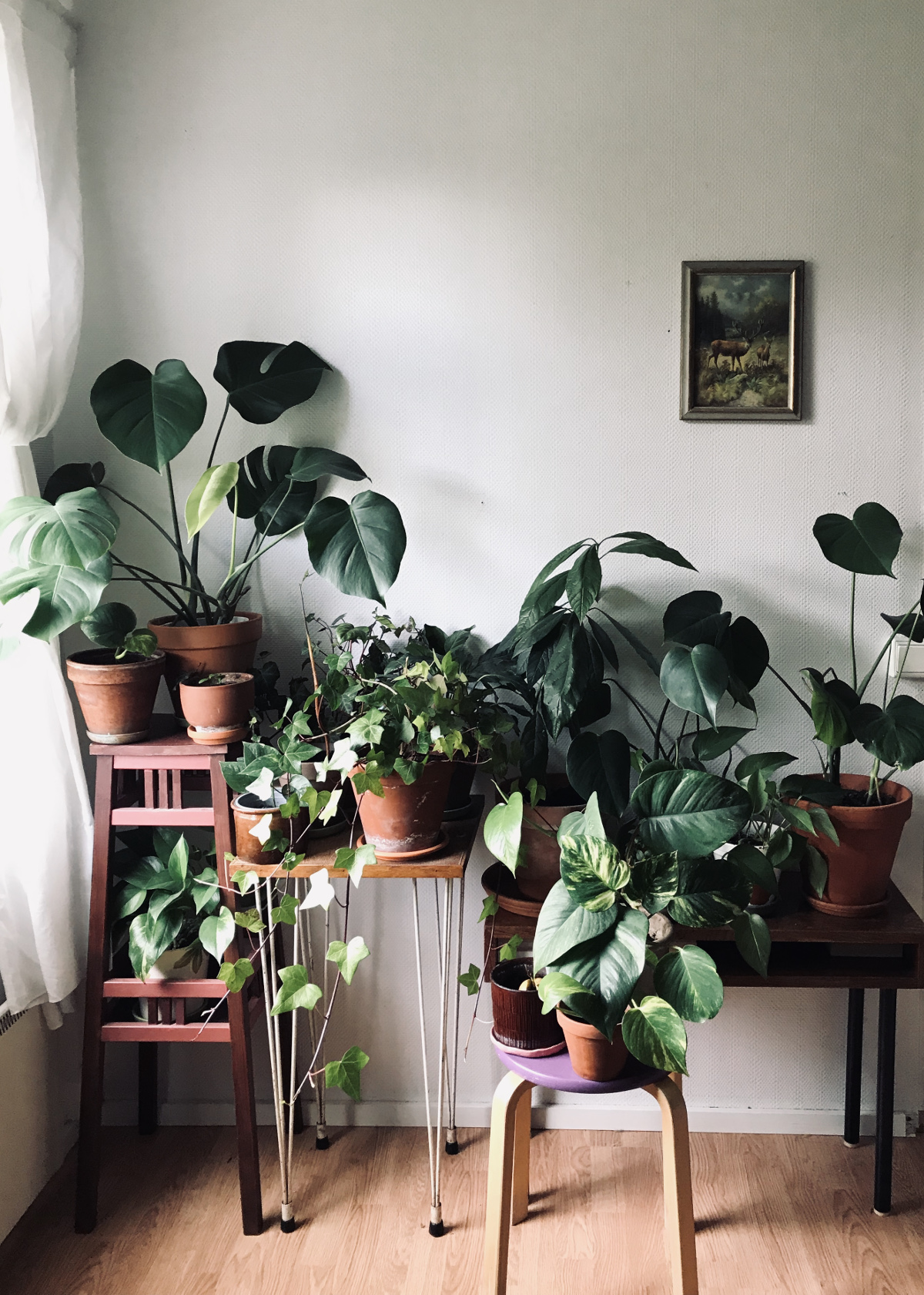 5 keinoa, joilla pidät viherkasvit hengissä talven yli
