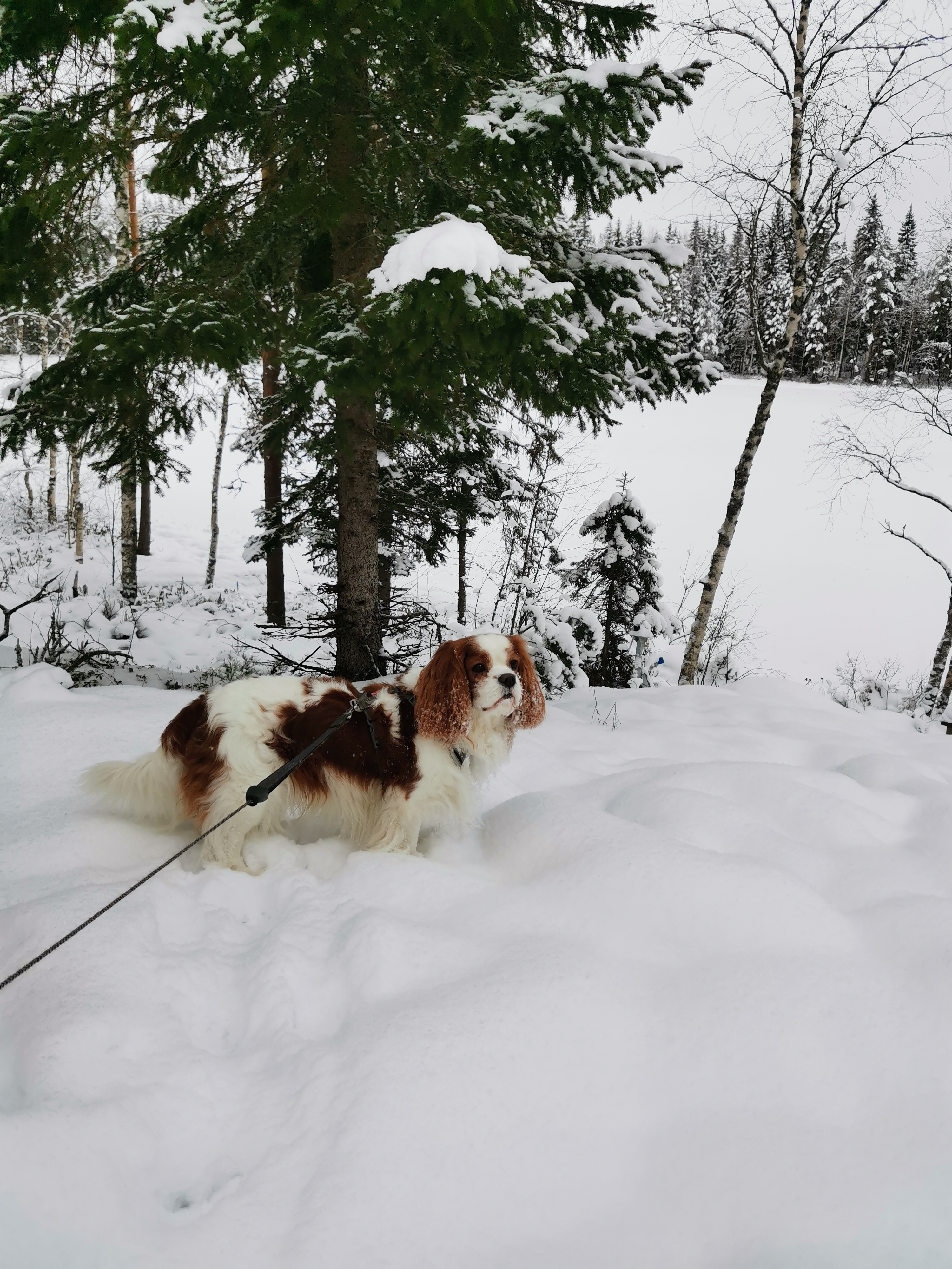 Mökkifiilistelyjä lumen keskellä