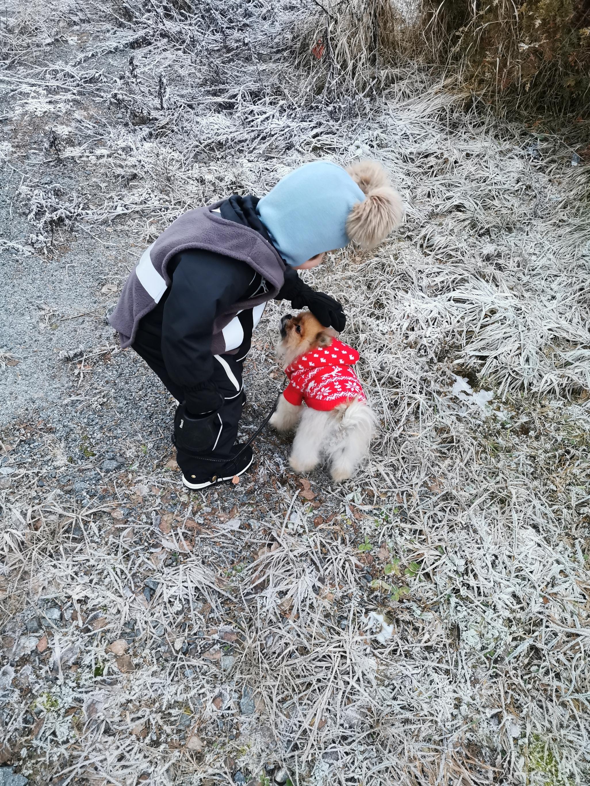 Pomeranian lapsiperheessä