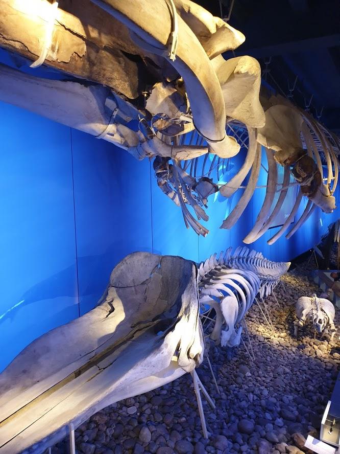 Ruotsin luonnonhistoriallinen museo