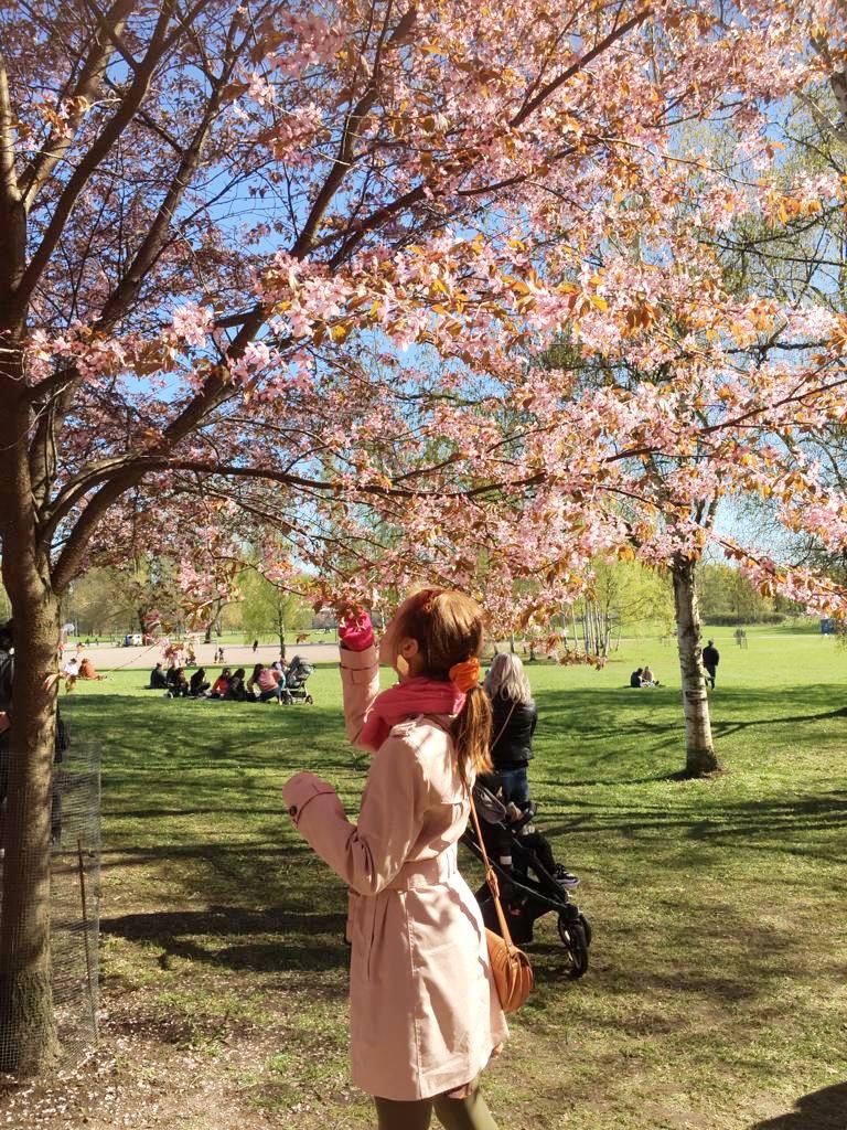 Menimme koko perhe yhdessä Roihuvuoren kirsikkapuistoon