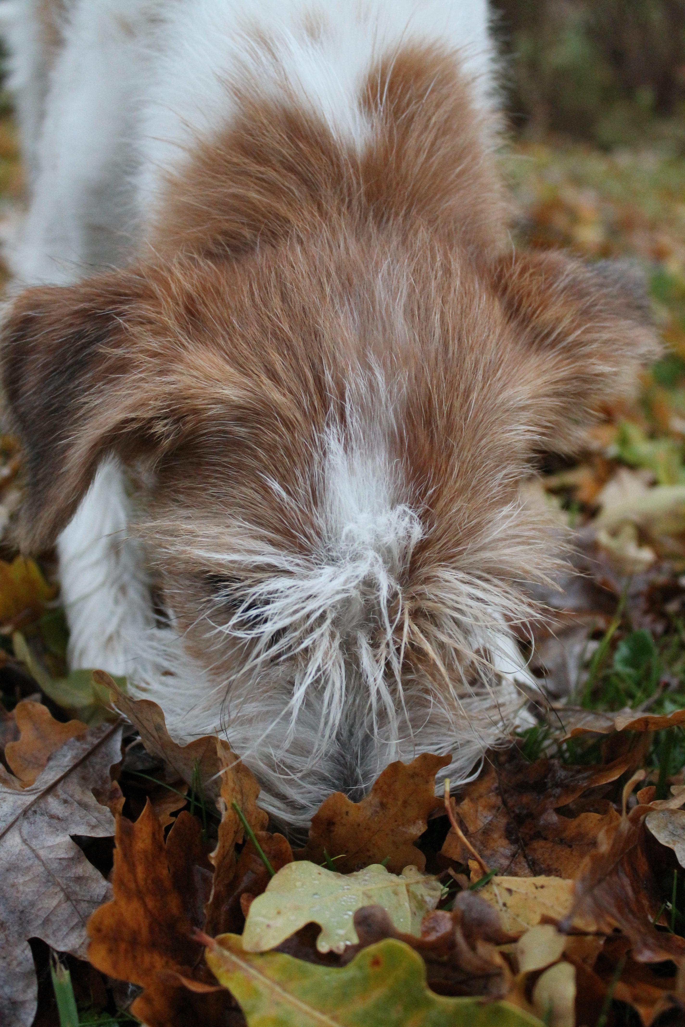 4x noloimmat & huvittavimmat koiramuistot