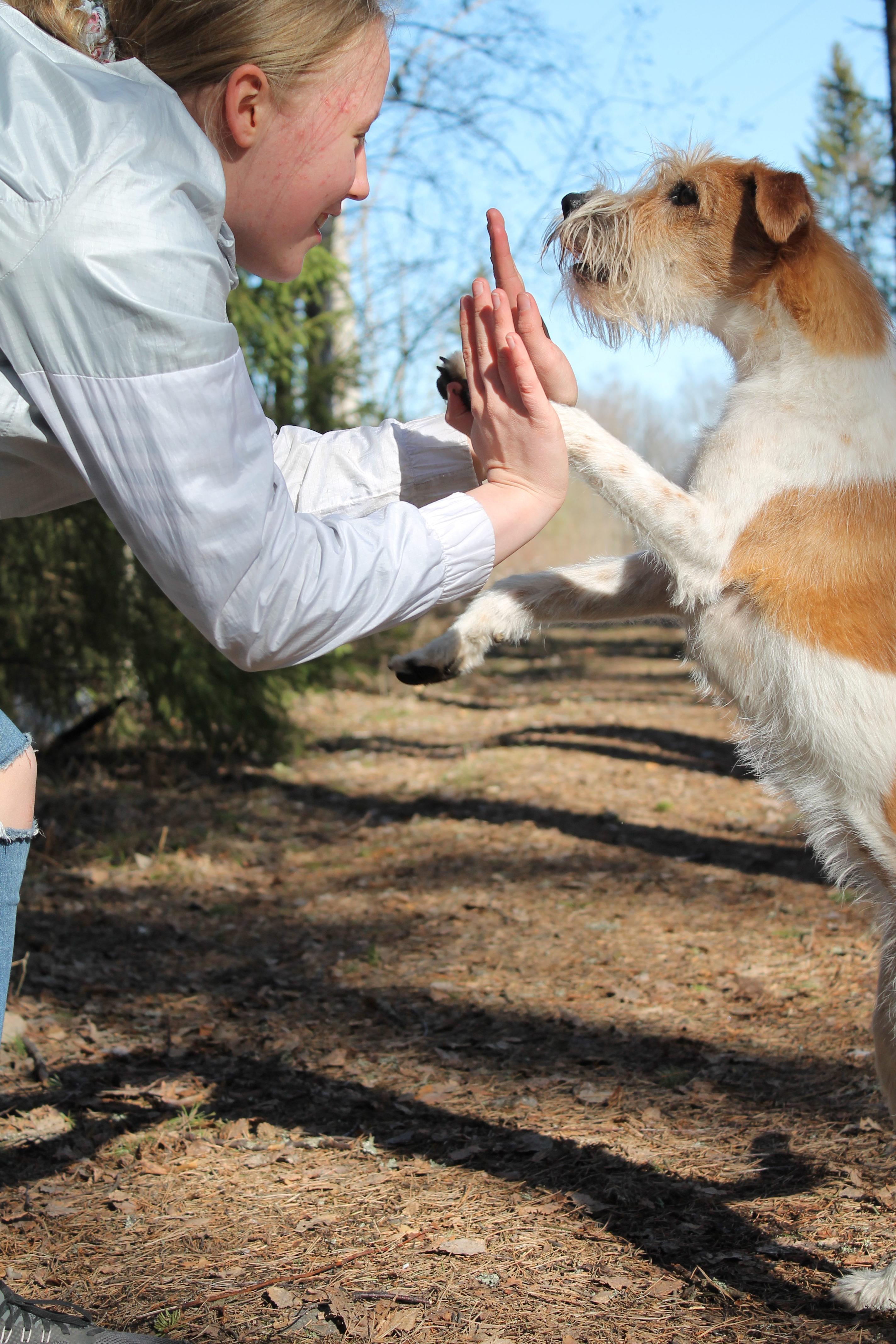 Mikä koiran kanssa kisaamisessa viehättää?