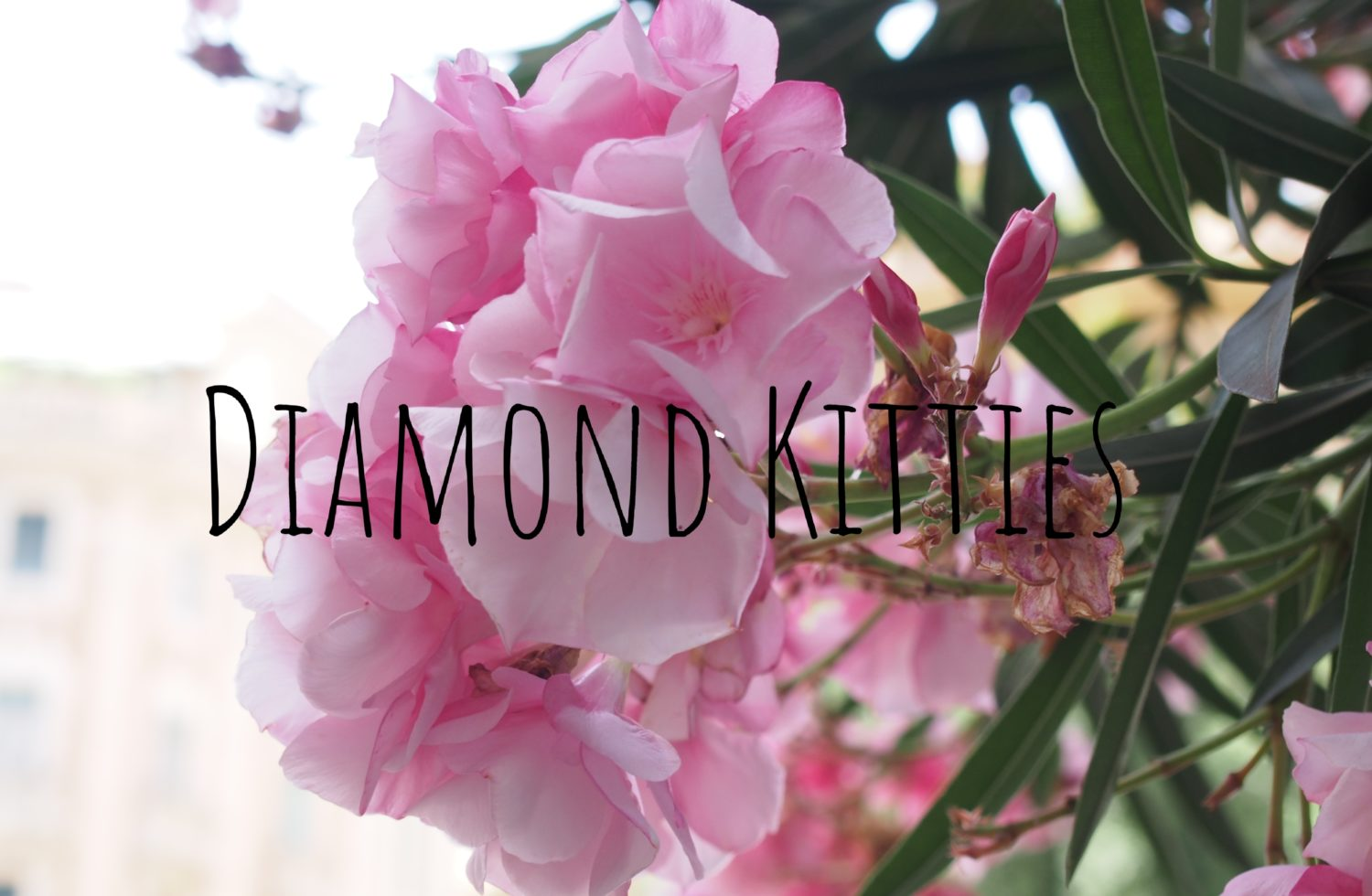 Diamond Kitties
