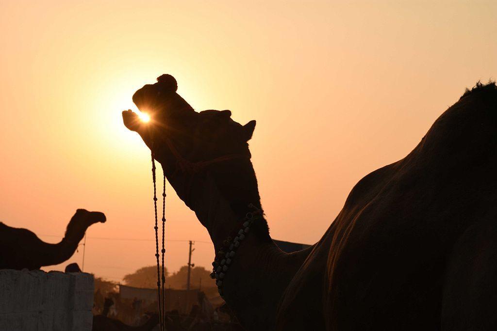 Kolmisilmäisen kamelin arvoitus