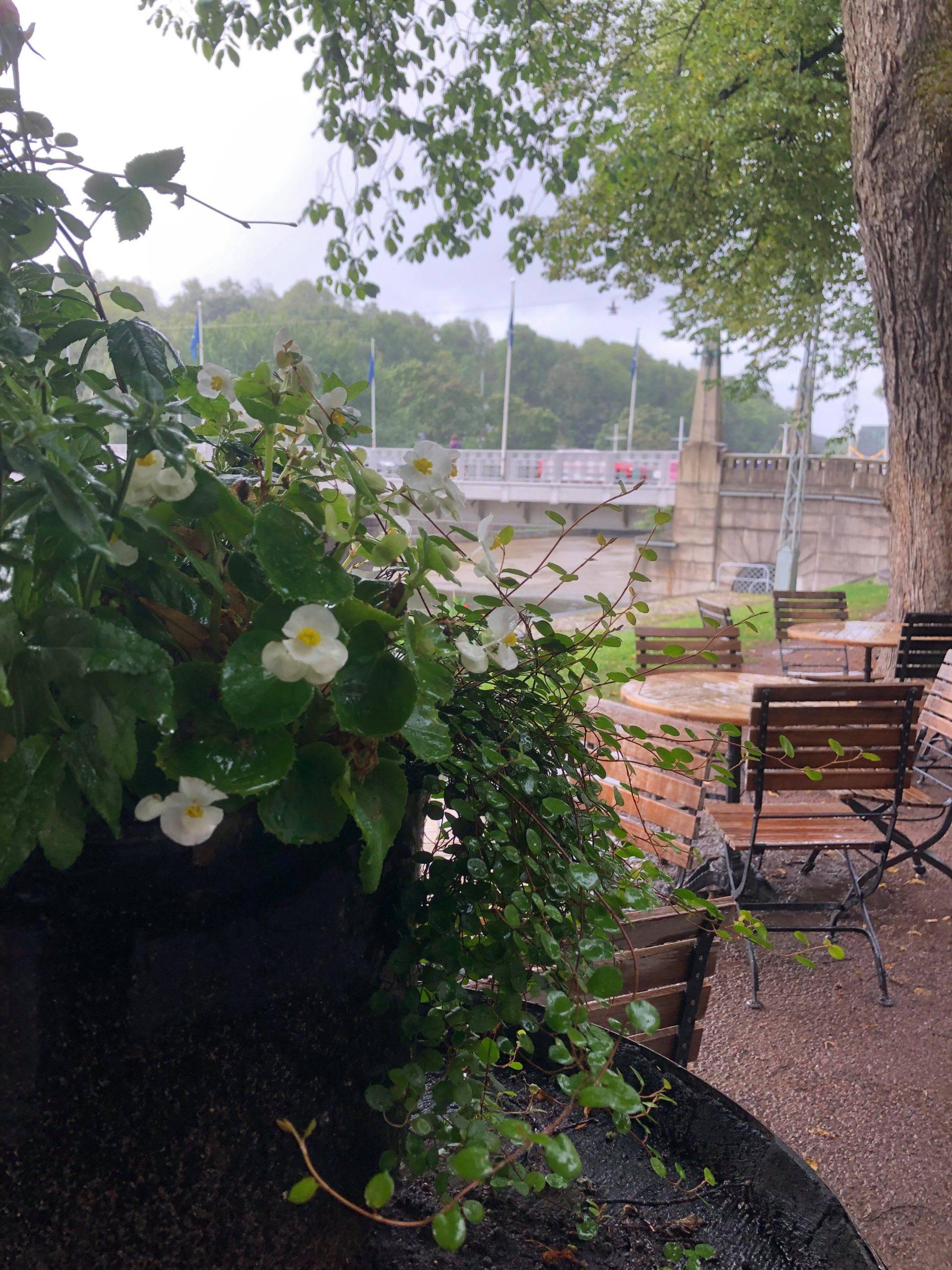 Aurajokiranta sateella
