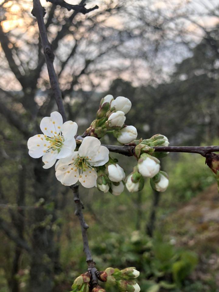 Kevätajatelma viikon jokaiselle päivälle