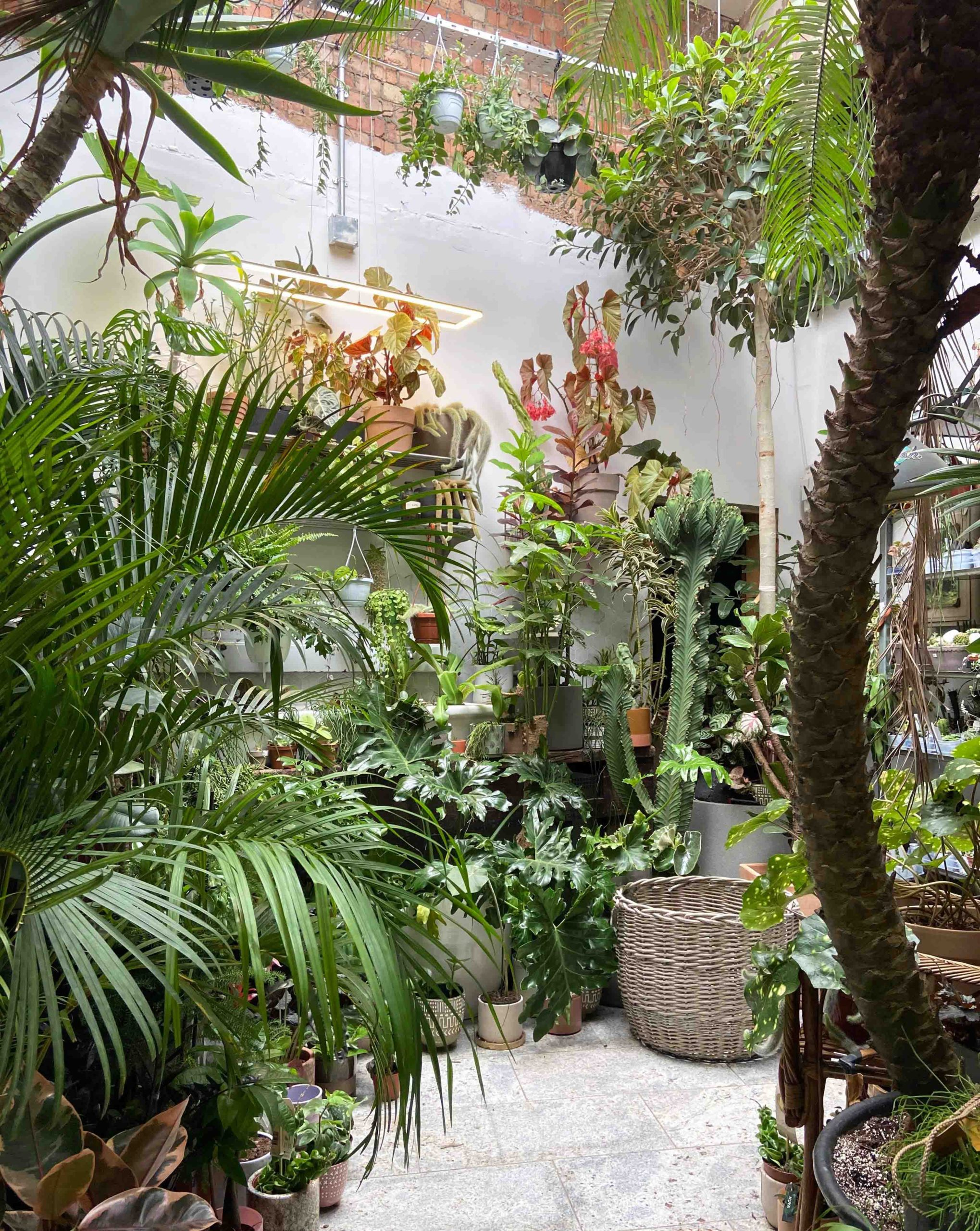 Conservatory Archives: Get Lost With Plants In East London