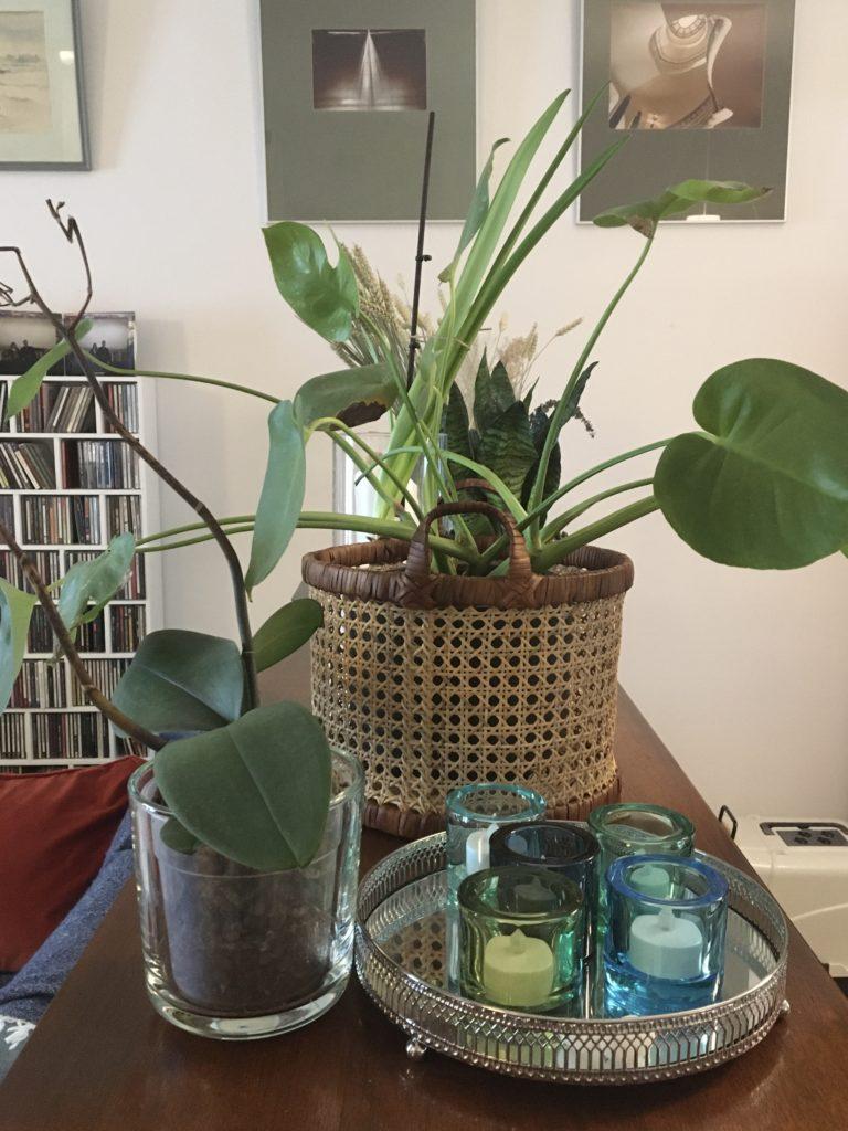Orkidea ja peikonlehti senkin päällä.