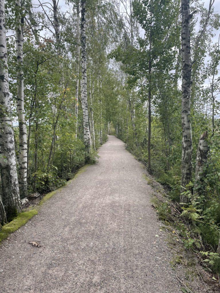 Kuva puitten reunustamasta suorasta polusta.