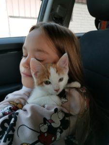 Meille tuli uusi kissanpentu!