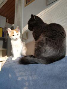 Kissauutiset ja vähähiilarinen elämäni jatQ