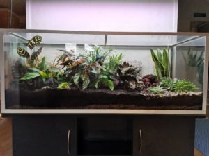 Akvaariosta vivaarioksi